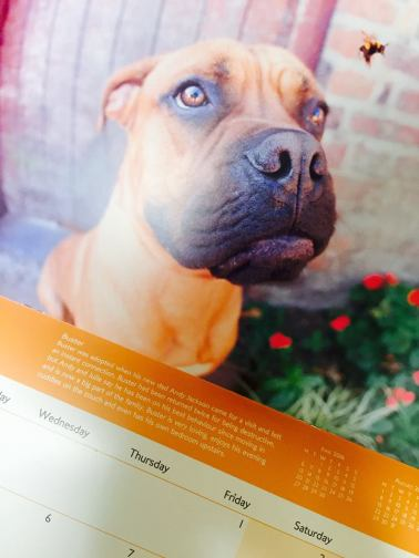 manchester-dogs-home-calender