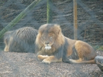 Knowsley-Safari-Park4