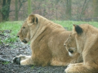 Knowsley-Safari-Park5