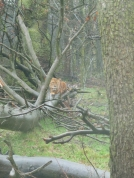 Knowsley-Safari-Park7
