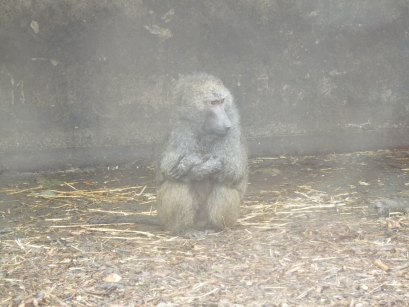 Knowsley-Safari-Park11