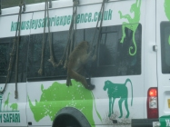 Knowsley-Safari-Park16