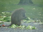 Knowsley-Safari-Park19