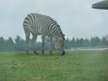 Knowsley-Safari-Park22