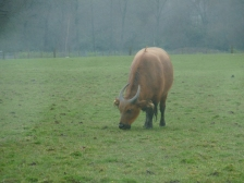Knowsley-Safari-Park23
