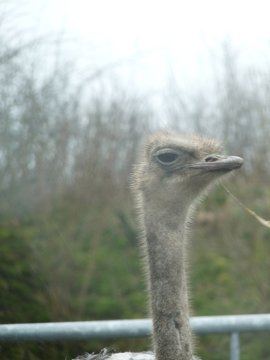 Knowsley-Safari-Park25