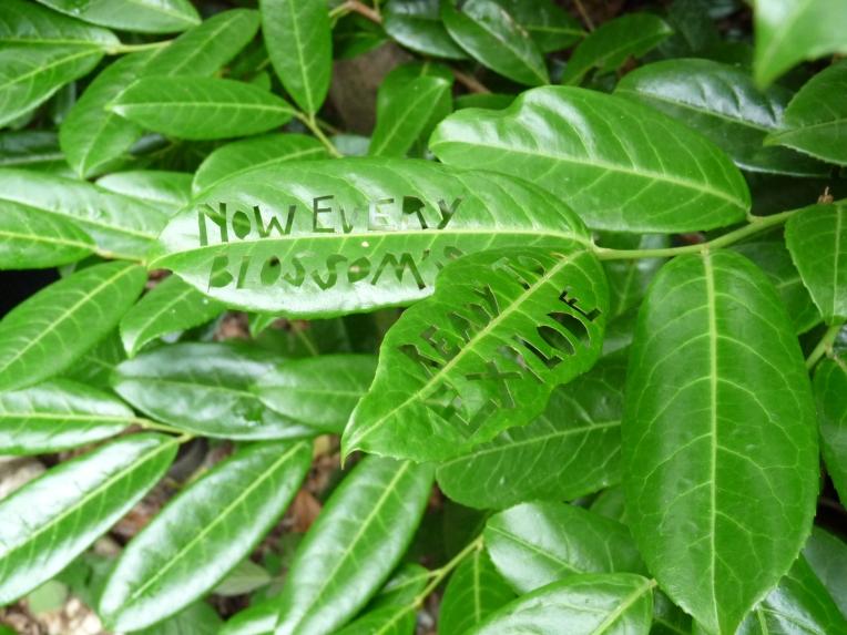 larmer tree gardens2