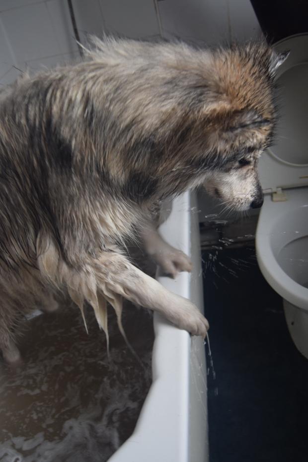 dog needs a bath